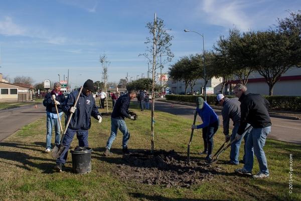 fcmd_treeplanting023